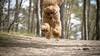 Flirterige James Hond is een hit op Instagram, voor een koekje doet de pup alles: 'Hij is gek op aandacht'