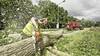 Staatsbosbeheer zet bijl in gevaarlijke essen bij Obdam