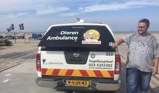 Zestig meeuwen hervinden vrijheid in IJmuiden: 'Net een kleuterklasje dat naar het strand gaat' [video]