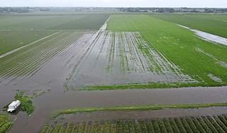 Hoogheemraadschap is geschrokken van de heftige regenval vrijdag. 'Waterbergingen zijn wel opengezet, maar we gaan evalueren wat er goed en niet goed is gegaan'