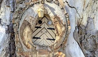 Louter de Kabouter bouwt het bos vol met kleine huisjes, PWN zit ermee in zijn maag: 'Het moet geen Efteling worden' [video]