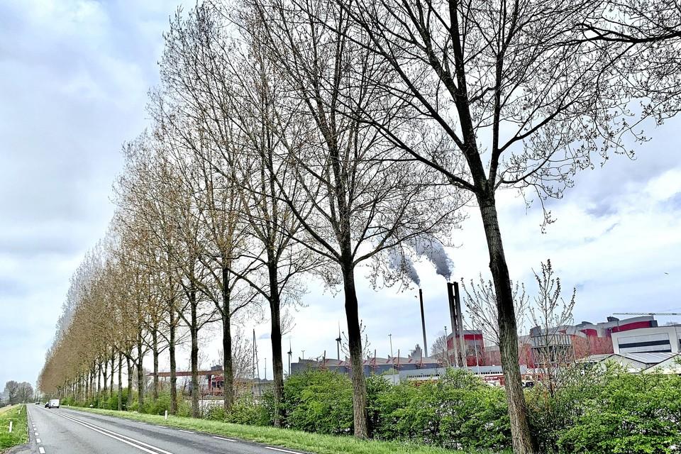 Ongeveer 500 bomen worden gekapt. Ze staan te dicht op de weg.