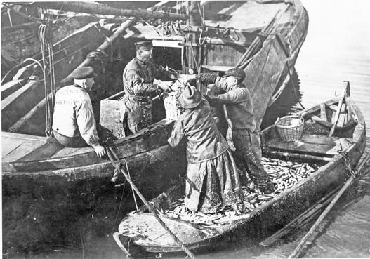 Zuiderzee vol blazers, bonzen, botters en blazers - Peter Dorleijn brengt de bloeiende visserij van toen tot leven