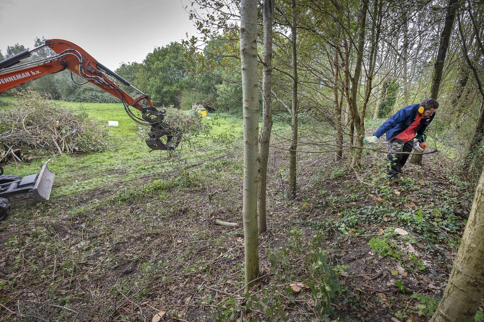 De snoeiwerkzaamheden op Blekersveld werden vorig jaar op last van de omgevingsdienst stilgelegd.
