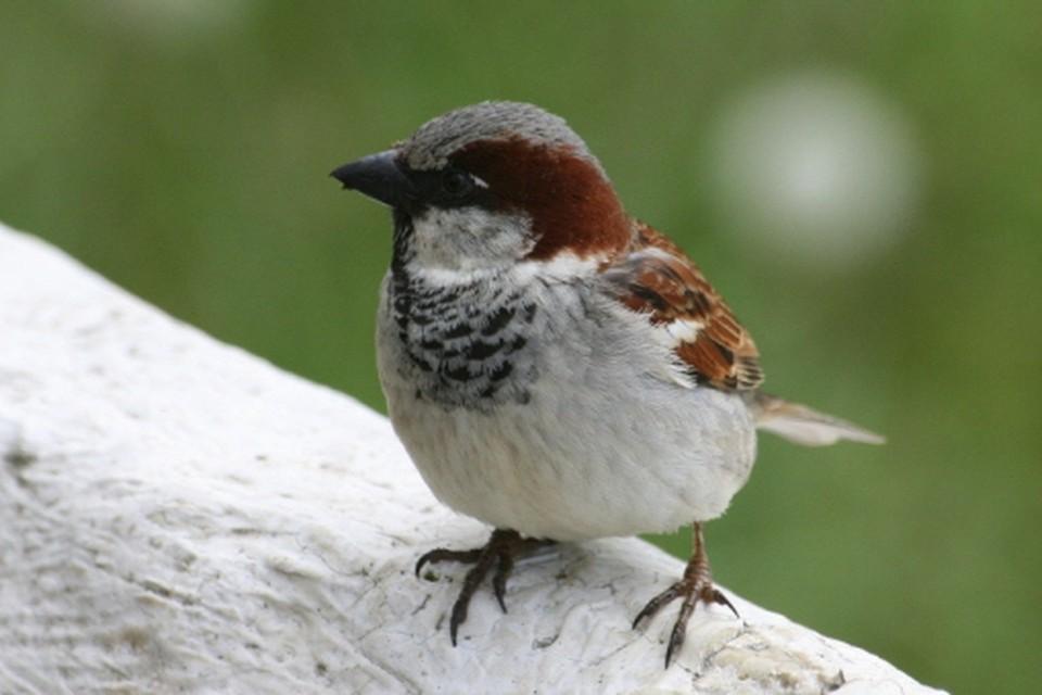 Welwonen stopt dakrenovatie om vogelnest