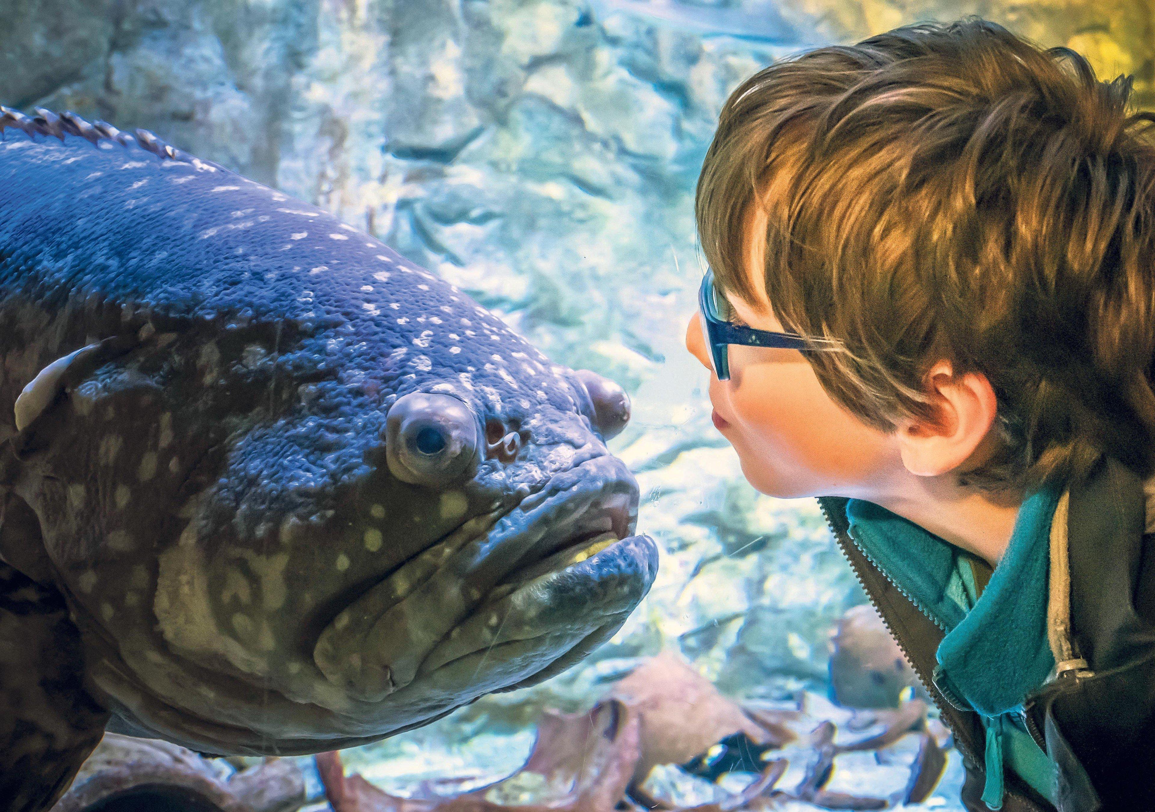 Bergen aan Zee aquarium