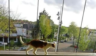 Alkmaar Centraal mist stationspoes Vlekkie. Hij werd doodgereden. 'We waren allemaal ontdaan. Het was zo'n leuk beest, mijn hart brak'