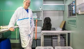 CSI voor dieren: Monique Verkerk is de enige forensisch dierenarts van Nederland. 'Criminelen hebben vaak een verleden als dierenmishandelaar'