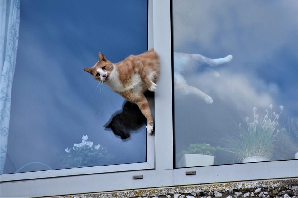 De bizarre actie van de kat in Soest, die door brandweer werd bevrijd. De brandweer plaatste foto's van de bijzondere de uitruk op haar website.