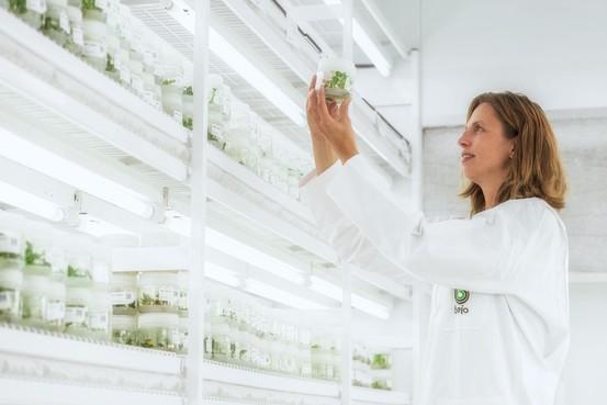 Bejo Zaden steekt veel geld in bijen, voor meer eigen imkerijen en onderzoek naar gezonde volken