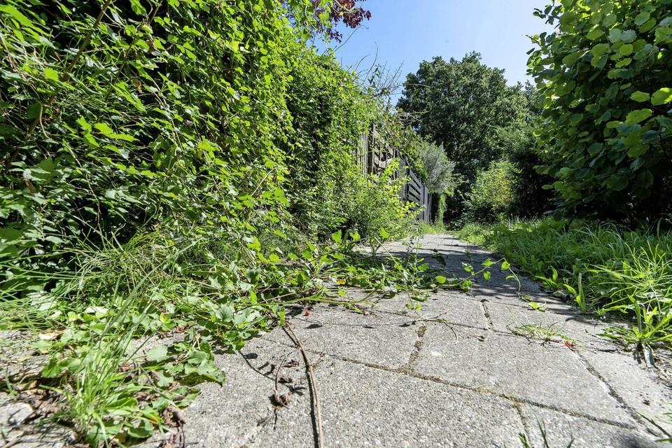 De gemeente Koggenland roept inwoners op te helpen bij het verwijderen van onkruid.