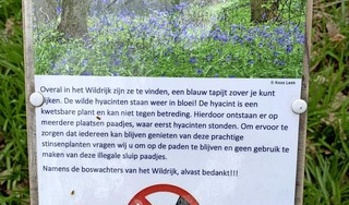 Coronawandelaars vertrappen hyacinten in het Wildrijk. Wie van de paden afgaat, kan een bon van honderd euro krijgen