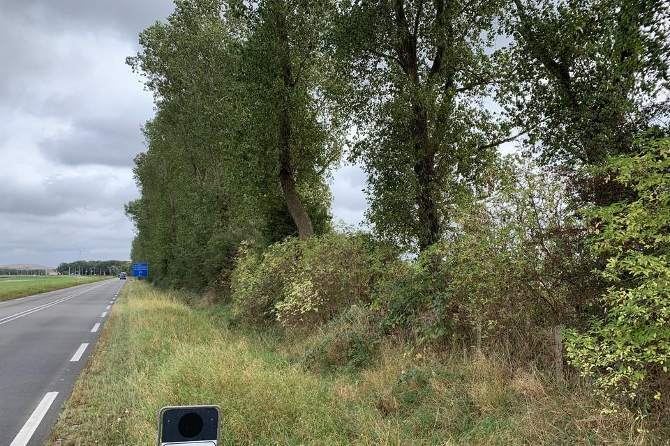De weg langs het kanaal met de bomen.