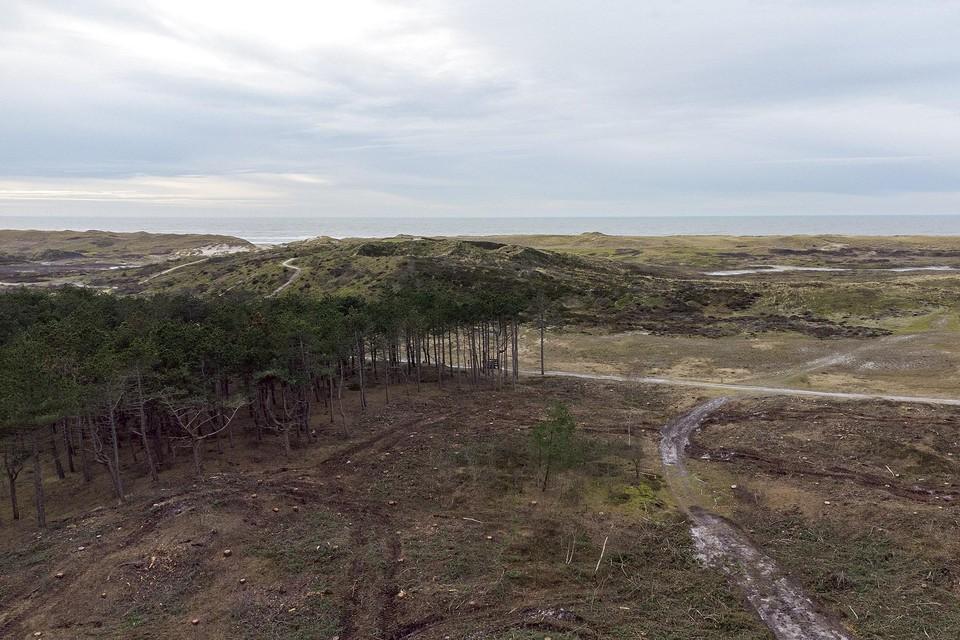 Het Van Steijnbos na de kapwerkzaamheden afgelopen januari.
