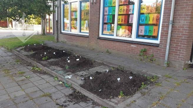 Moestuintjes bij Texelse basisschool vernield