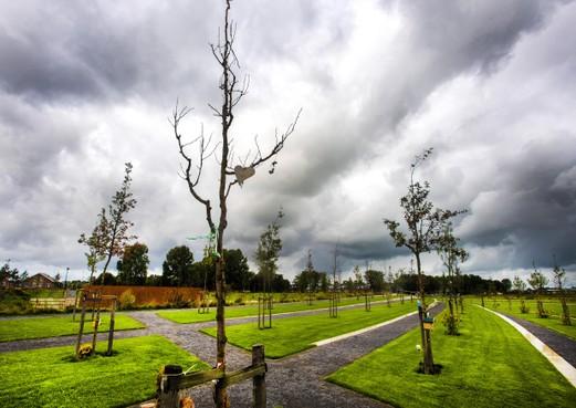 Veel bomen op Nationaal Monument MH17 dood