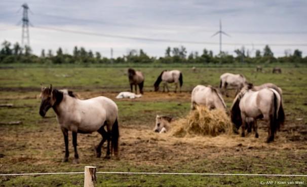 Elf paarden vangweide Oostvaardersplassen dood