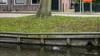 Noodkreet na verdrinking kat Gizmo in Edam slaat aan: petitie voor komst touwen, trappetjes of eilandjes wordt grif getekend