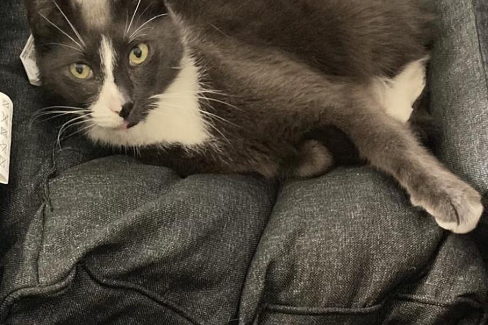 Ziggy heeft een opvallende witgrijze neus.