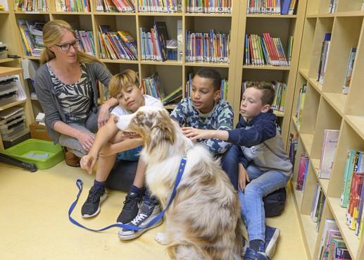Een therapiehond op een Zaandamse basisschool: Miles geeft ze zelfvertrouwen