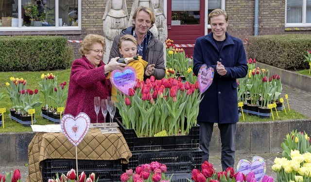 'Back to Normal' heet de nieuwe tulp: Huisbroei Lutjebroek neemt kleurrijk voorschot op betere tijden [video]