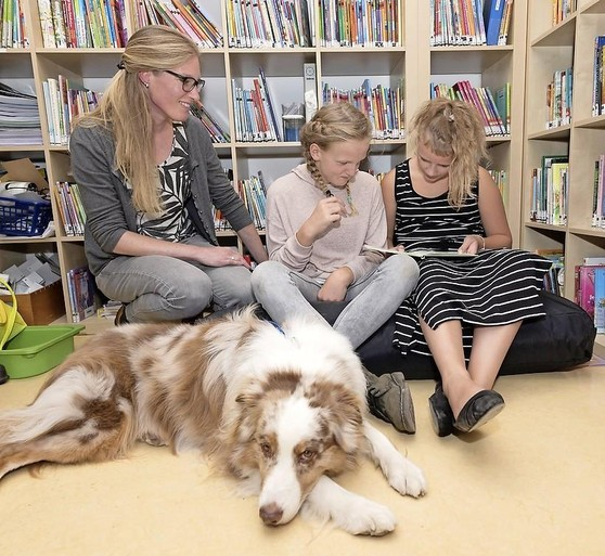 Therapiehond Miles werkt op speciaal basisonderwijs in Zaandam: 'Hij zegt niet of het goed of fout is'
