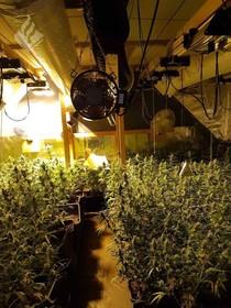 Dankzij beelden van politiehelikopter wordt in Den Helder een hennepkwekerij met bijna tweehonderd planten ontdekt