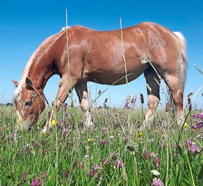 Krommenieër mag geen paarden en pony's houden