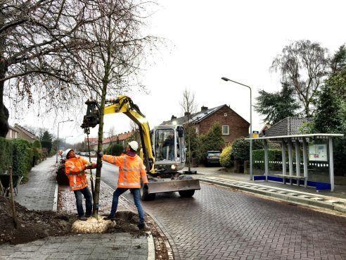 Gevaarlijke bomen in Hilversum vervangen [video]