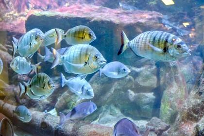 Zee Aquarium Bergen aan Zee viert 65-jarig bestaan