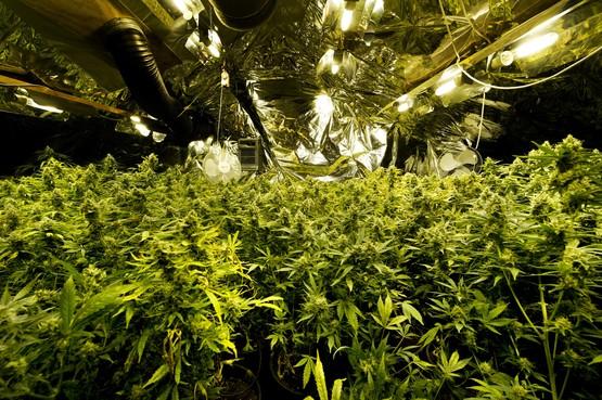 Drugspanden dicht in Hoorn en Medemblik