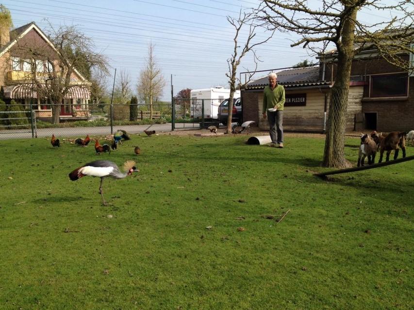 Jan Koomen bij zijn ontsnapte kroontjeskraanvogel in zijn parkje Dierplezier in Spanbroek.