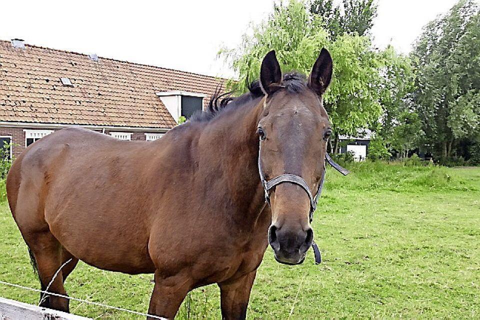 Een instructeur en vrijwilligers helpen de gehandicapte ruiters bij het paardrijden.