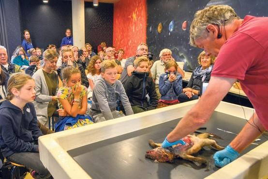 Op Texel gevonden vosje blijkt te zijn doodgeslagen