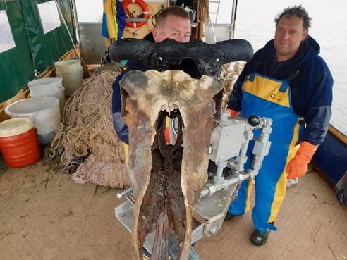Vissers vangen schedel in de Gouwzee: Is het een paard, een rund of een reuzenhert?
