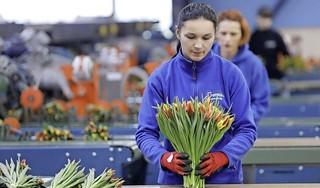 Taks op arbeidsmigrant houdt komst buitenlandse werknemers echt niet tegen [Commentaar]