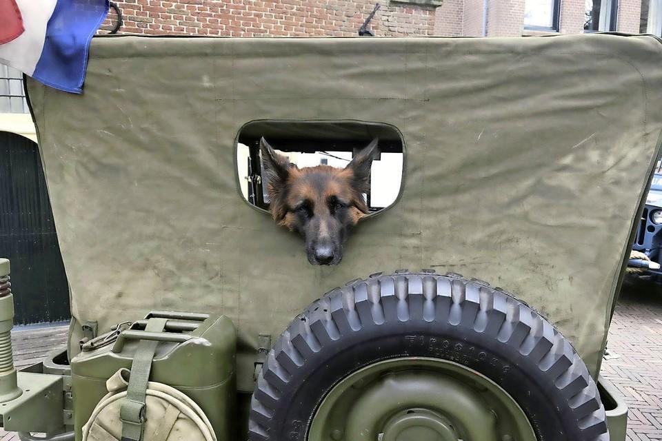 De hond D-Day is klaar voor de maaltijdbox-bezorgtocht van de drie restaurants.
