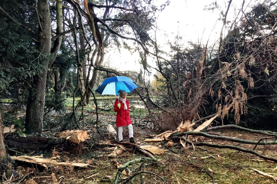 Lida Hoogzaad stapt met Jonny over restanten van de boom.
