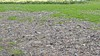 Zwarte stinkende terreinen na 'bemesten' groenstroken in Zaanstad: steeds meer klachten, partijen eisen stopzetting