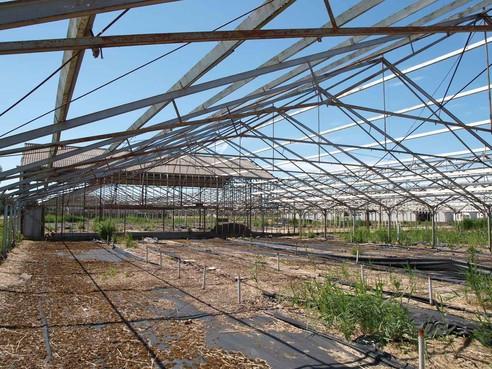 Woningbouw in Rijsenhout: twee rechtszaken verloren, eentje gewonnen