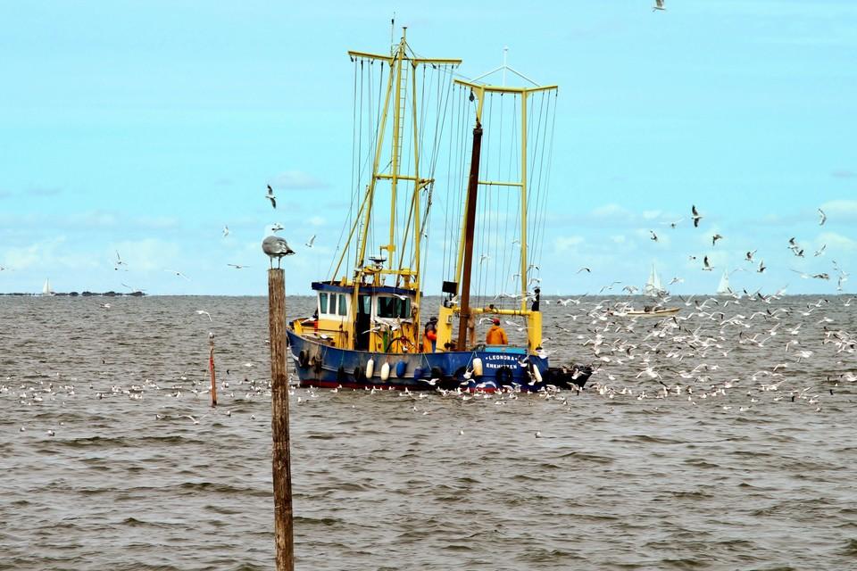 De EH49 van de firma J. &W. Klaassen. De vissers uit Enkhuizen hebben voor de kust van Andijk ruim zestig vaste fuiken.
