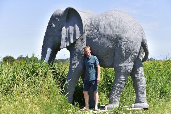 Toch geen olifanten naar Hoenderdaell, want... dan zou het wel eens te druk kunnen worden op het landgoed