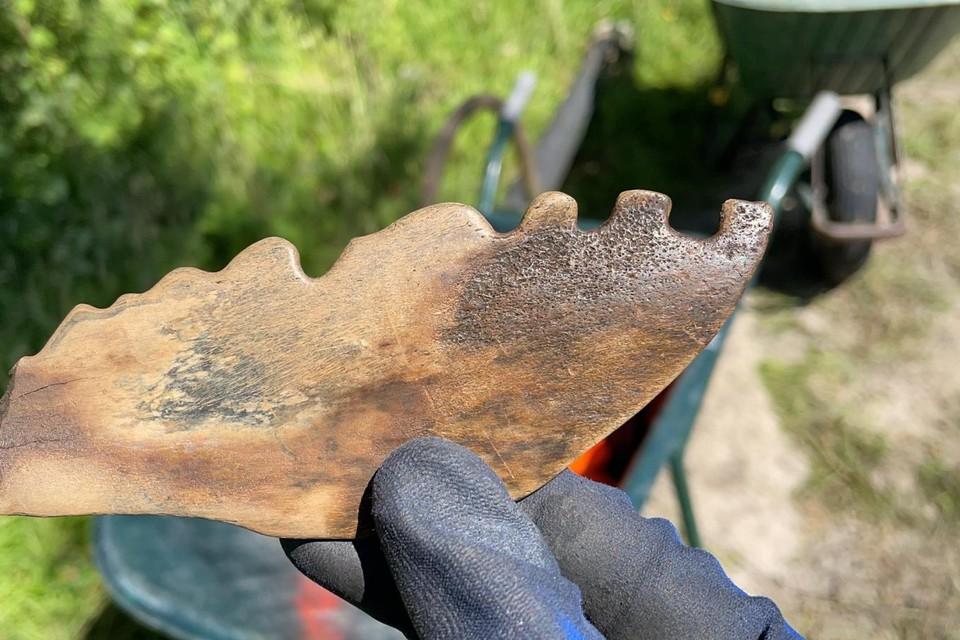 De bobbelkam van zo'n vierduizend jaar oud.