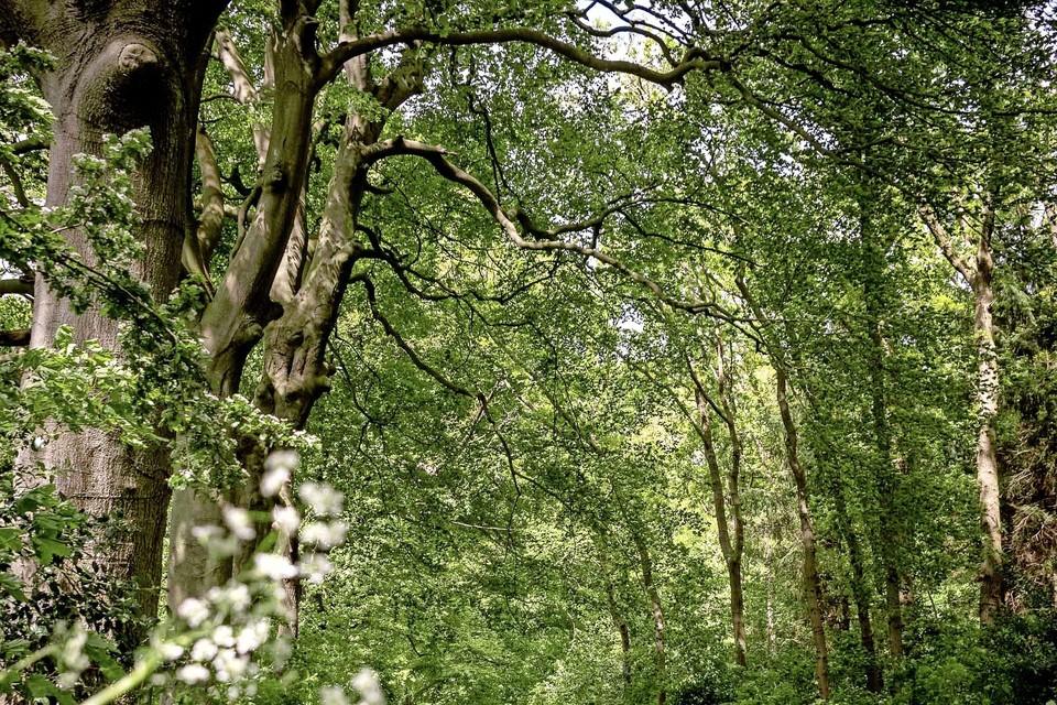 Lokhorsterduin is het enige bos van Hillegom, maar niettemin bij veel Hillegommers onbekend.