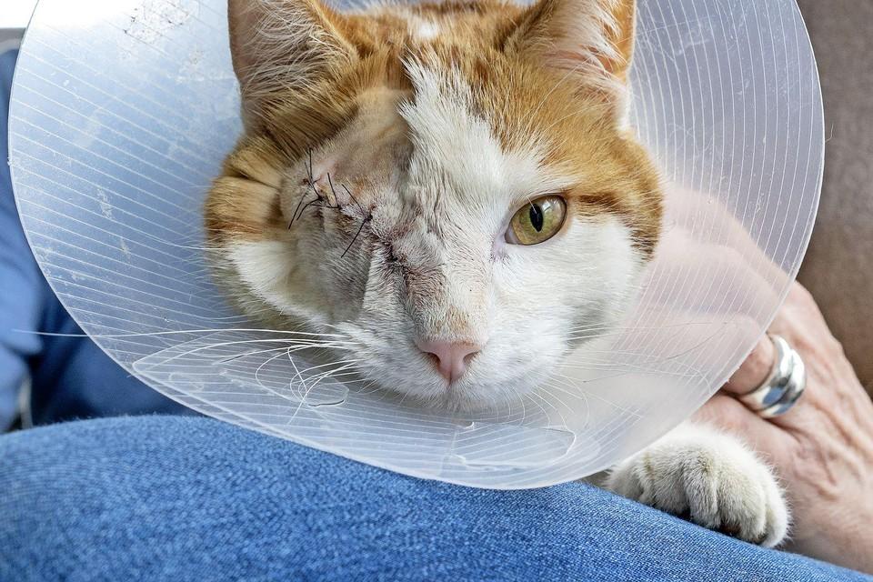 Jack is niet ongeschonden uit de strijd gekomen, maar hij leeft.
