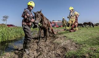 De brandweer is uit de brand: deze zomer worden 28 assistenten afgeleverd. De kleine kazernes kunnen openblijven