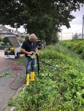 Duizendknoop te lijf met 5000 volt in Castricum
