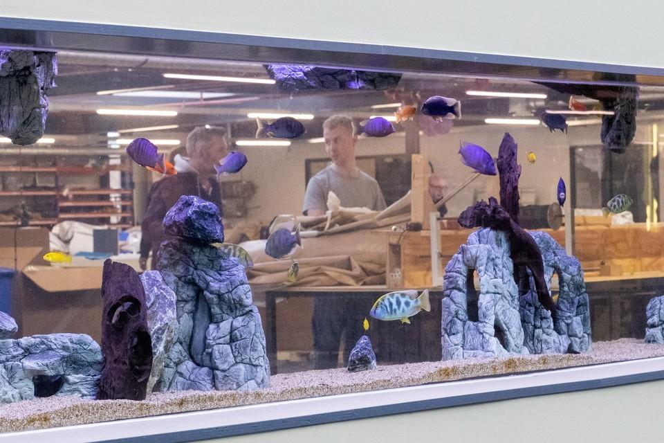 Het aquarium op de eerste verdieping, in de wand tussen de showroom en de productieruimte, is een blikvanger in de nieuwe behuizing van Karsten Tenten.