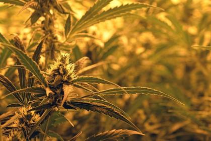 Wietplantage ontdekt in bedrijfspand Purmerend