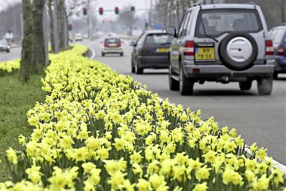 De Van Heuven Goedhartlaan is mooi in het verjaar en daardoor rommelig de rest van het jaar.